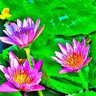 Water Lilies by Zzenco