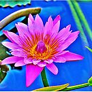Water Lily by Zzenco