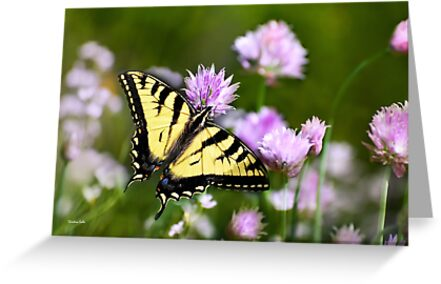 Butterfly Dream by Christina Rollo