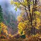 Green Mountain Fall by John Poon