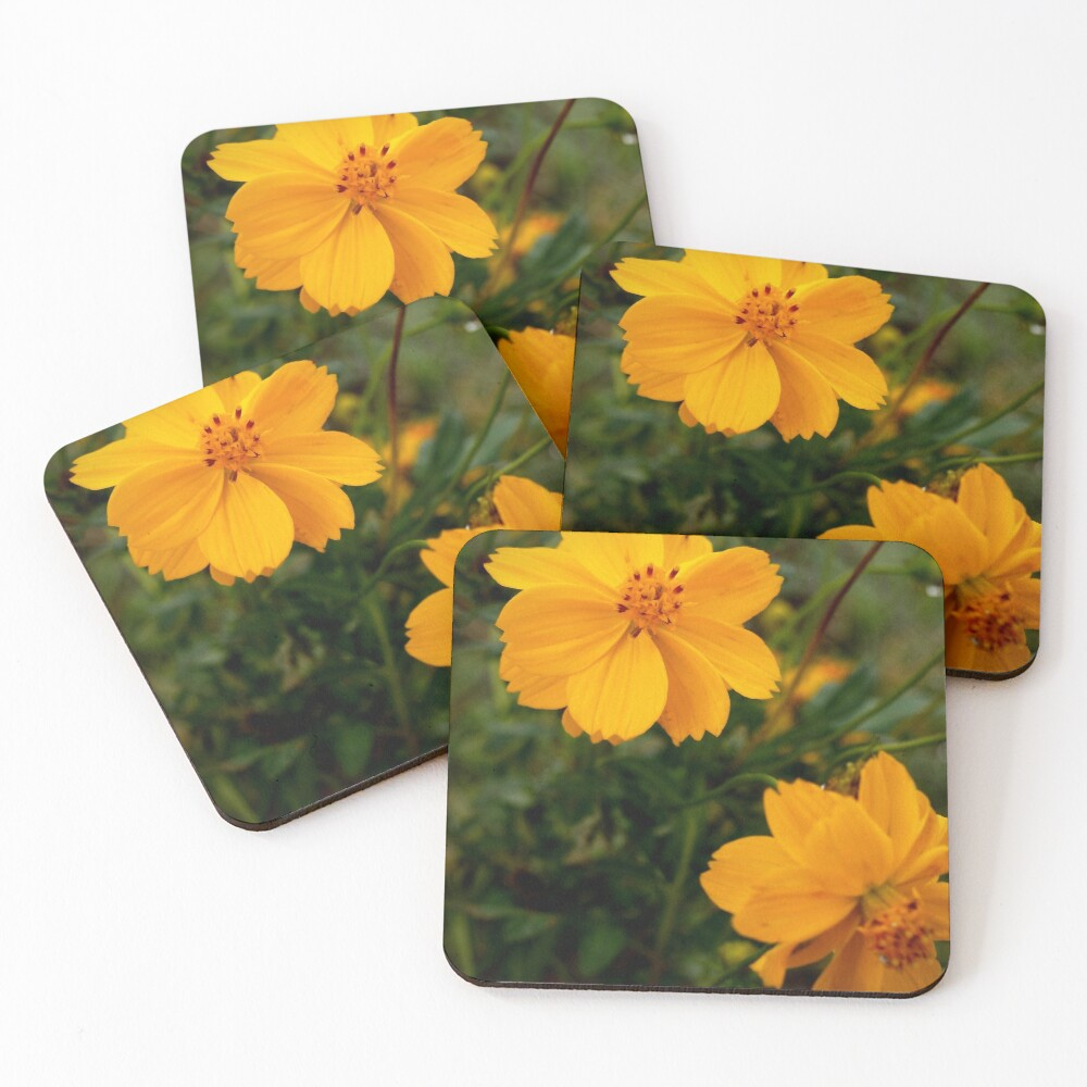 Golden Coreopsis from A Gardener's Notebook Coasters (Set of 4)