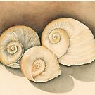 Triplet Shells by Bloomtown