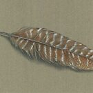 Turkey Feather by Bloomtown