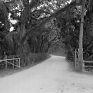 Palm Tree Light Pole along a Dusty Florida Lane by Bill Wetmore