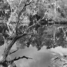 Myakka River Wilderness by Bill Wetmore