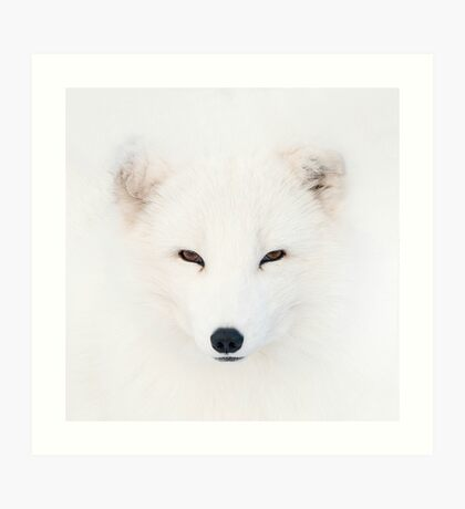 Polar Fox Art Print