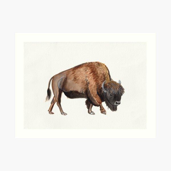 Watercolour American Bison Art Print