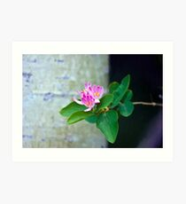 Honey Suckle Blossoms - Digital Oil  Art Print
