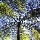 Underneath a Tree Fern by TheaShutterbug