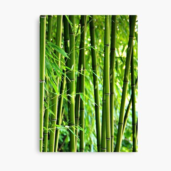 Bamboo Leinwanddruck