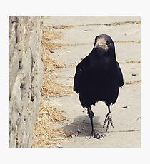 Casual Crow Photographic Print
