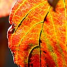 Autumn Leaves - Macro by ctheworld