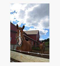Amish Draft Horses Photographic Print