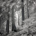 untitled  by jackson photografix
