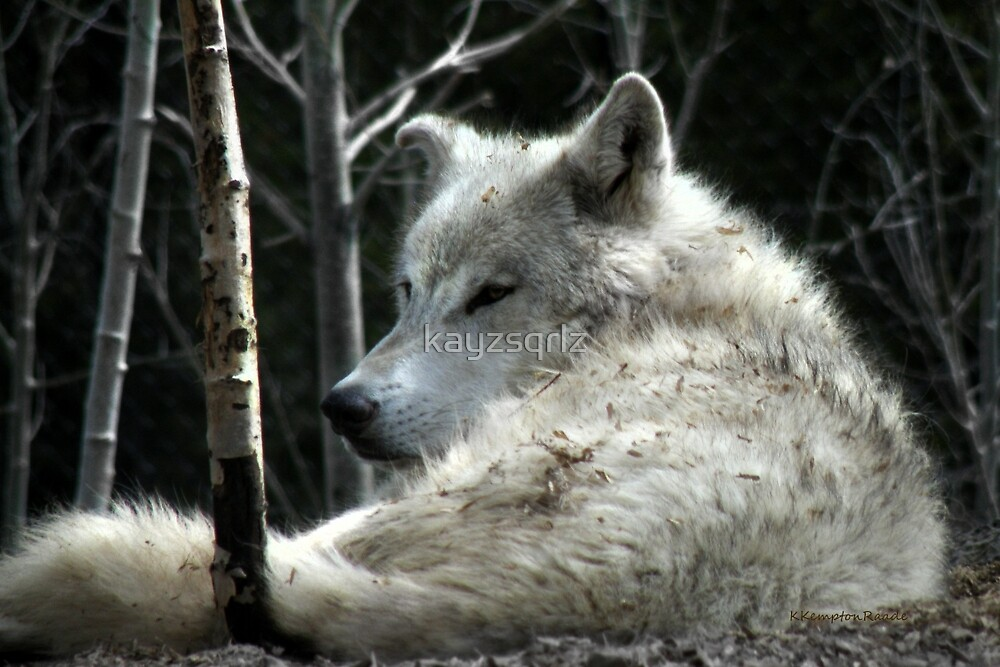 Quot Ghost Wolf Quot By Kayzsqrlz Redbubble