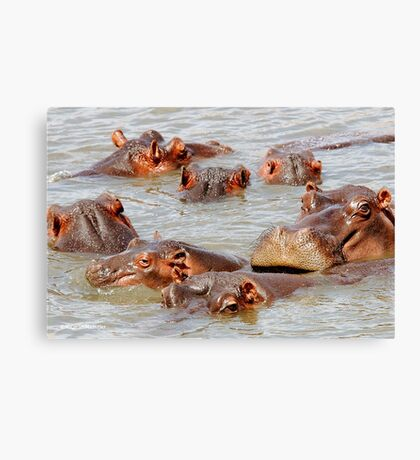 A FAMILY GATHERING - *Hippopotamus amphibious* Canvas Print