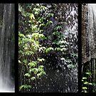 Rainforest Waterfall Triptych by Kathie Nichols