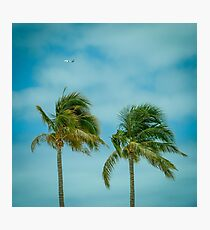Retro Tropical Palm Trees With Plane in Sky Photographic Print