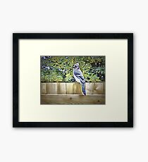 King Of The Blue Jays Framed Print