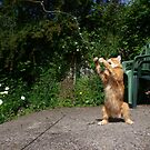 Cat fishing by turniptowers