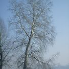 December with winter colors by Ana Belaj