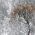 20.1.2017: Tree in Snowfall by Petri Volanen