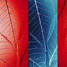 Sheer Veins by Tamarra