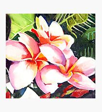 Pink Plumeria Heaven Scent Photographic Print