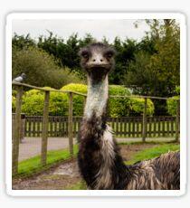 Emu Stare Sticker