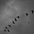 Birds  by Digby