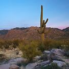 Catalina Foothills by Richard G Witham