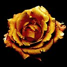 Bronzed Rose by AngieDavies