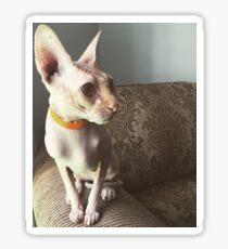 Hairless Cat Sticker
