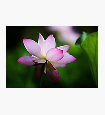 Water Lily by Winnie Photographic Print