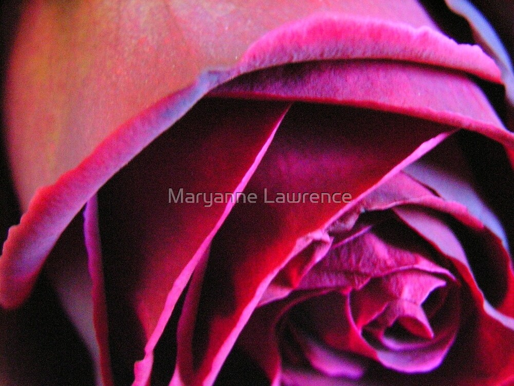 Red 1 by Maryanne Lawrence