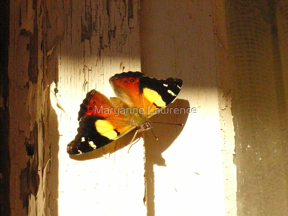 Catching the sun by Maryanne Lawrence