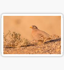 sand partridge (Ammoperdix heyi) is a gamebird in the pheasant family  Sticker
