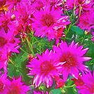Bunch of pink and yellow flowers by ashishagarwal74
