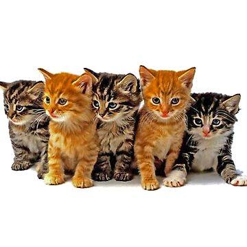 kittens by craigio2778