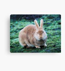 Soft Brown Bunny Canvas Print