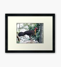 Australian Brushturkey Framed Print