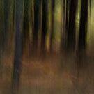 Dark Woods #2 by Martin Griffett