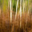 Silver Birch in Autumn Ferns by Martin Griffett