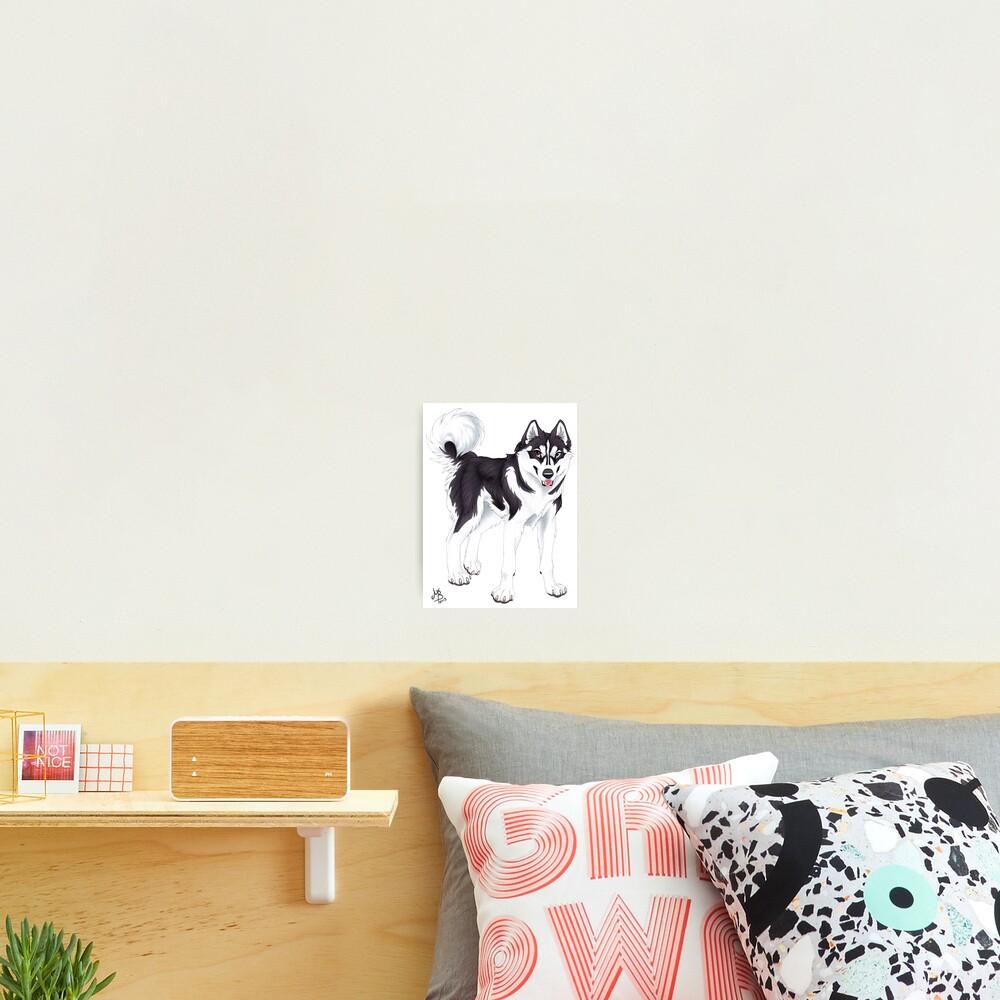 Black Siberian Husky (no text) Photographic Print