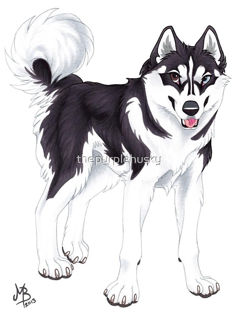 Black Siberian Husky (no text) by thepurplehusky