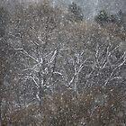 Magic winter landscape . by Dr.Andrzej Goszcz. European Union (EU). Poland . by © Andrzej Goszcz,M.D. Ph.D