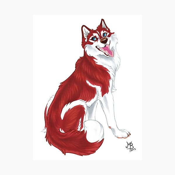 Red Siberian Husky (no text) Photographic Print