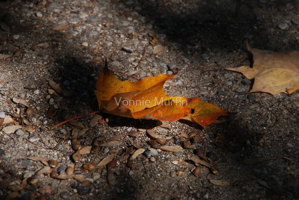 Fallen Leaves by Vonnie Murfin
