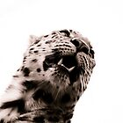 Leopard III by Beth Wold