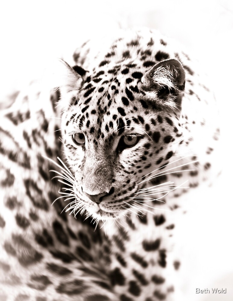 Leopard V by Beth Wold